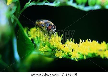 bee on a yellow flower