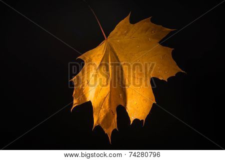Yellow Leaf And Drops