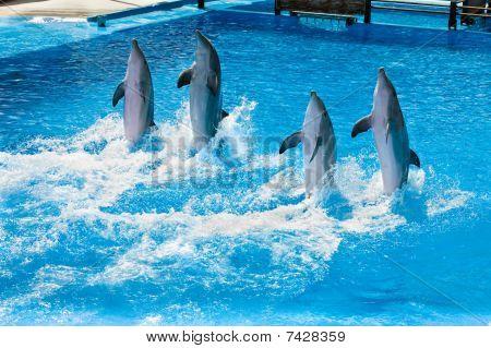 Dolfine Show