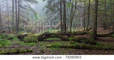 Summer Landscape Of Old Forest And Broken Tree