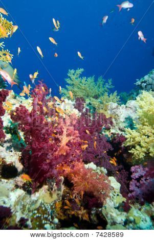 Colourful Soft Corals