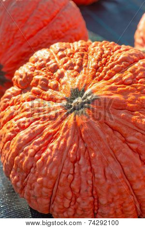 Indian Pumpkin