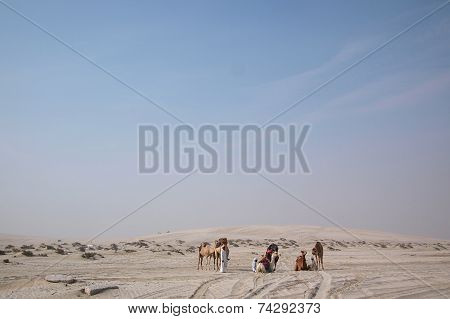 Bedouin With Dromedary