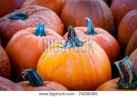 Focus On A Pumpkin On Pumpkin Patch