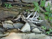 stock photo of driftwood  - This is a photograph of a piece of driftwood in it - JPG