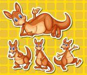 foto of kangaroo  - Illustration of a set of kangaroo  - JPG