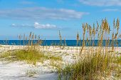 image of alabama  - A beach scene on the Alabama Gulf Coast - JPG