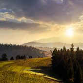picture of coniferous forest  - coniferous forest on hillside over foggy valley in autumn mountains at sunset - JPG