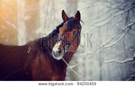Portrait Of A Sports Stallion.