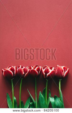 Marsala Colored Tulips