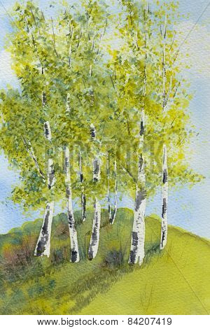 Silver Birch Trees in Summer Watercolor Illustration