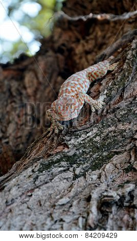 gecko on the tree