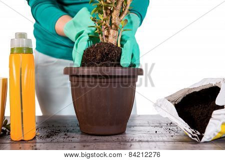 Woman with flower in pot, spring replanting flowers