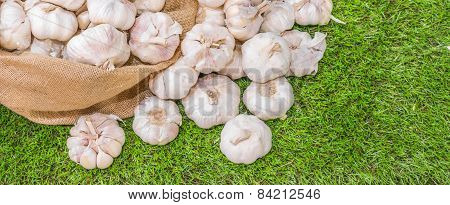 Garlic In Sack Bag
