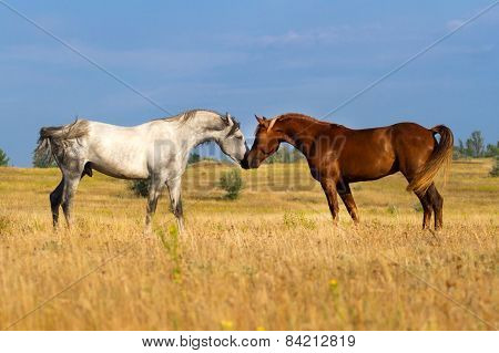 Couple of  horse