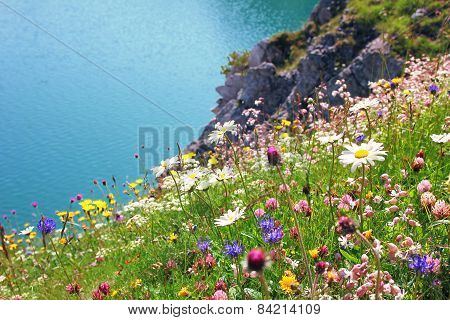Variety Of Wildflowers, Coastal Landscape