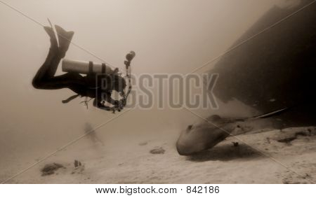 Diver and Giant Stingray