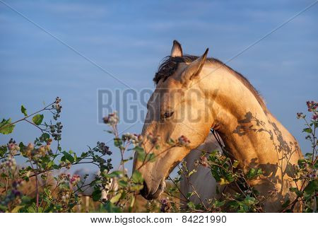Beautiful light horse in a field eating grass, grazing.