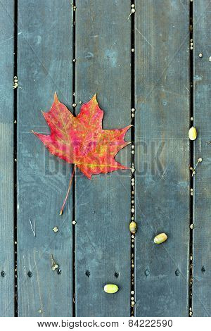 The Red Maple Leaf On A Green Bench In Autumn