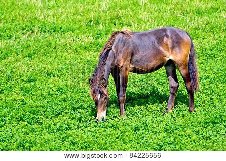 Horse brown on grass