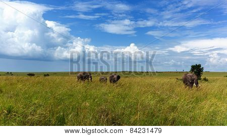 Africa, elephants, Kenya, safari, road, nature, wild animals