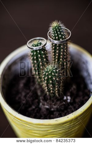 Wedding Rings On The Cactus