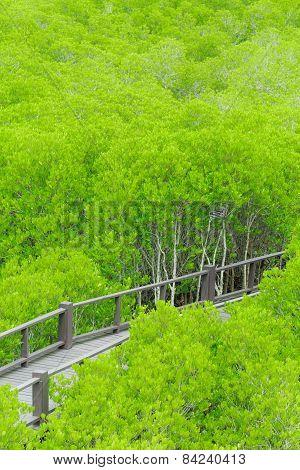 Mangrove Forest Walkway