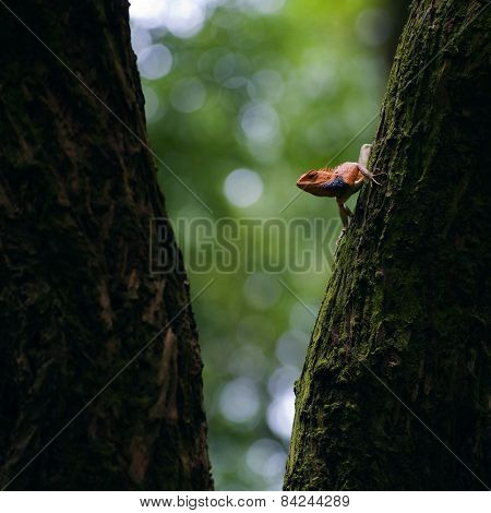 Orange Lizard Popping Head Out In Between Trees