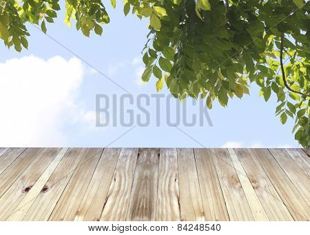Broad Planks And Tree In Garden.