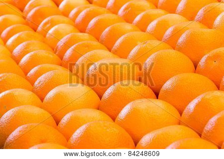 Lines of many oranges in rows