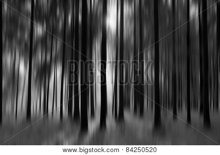 Forest With Snow, Black&white