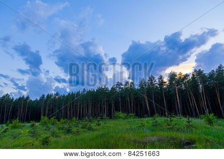 Pine forest and cloudy sky at the end of day