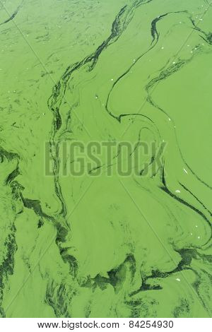 Blue-green Algae Or Cyanophyta From Above