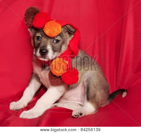 Brown And White Puppy In Orange Scarf Sitting On Red