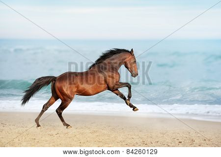 Beautiful brown horse galloping along the shore of the sea on a summer day.