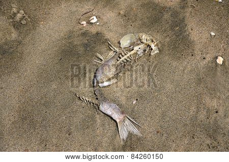 Decayed fish in the sand