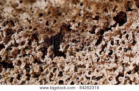 Termite Nests.