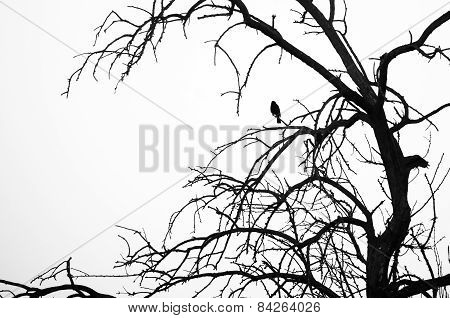 Silhouetted Bird Perched In A Tree Against A White Background