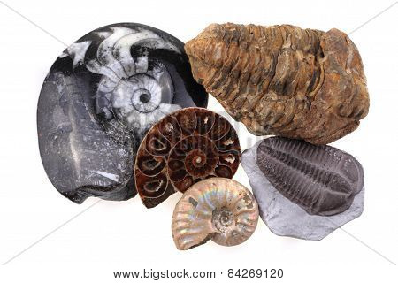 Old Fossil Collection