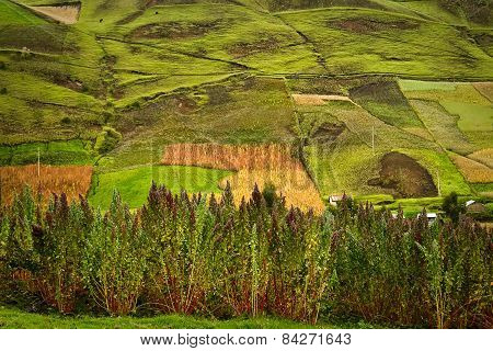 Crop plantations in Riobamba, Ecuador