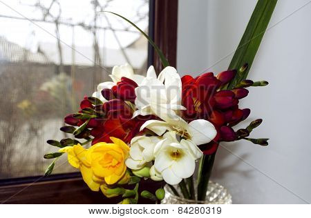 Bright bouquet of odorous freesia on a windowsill