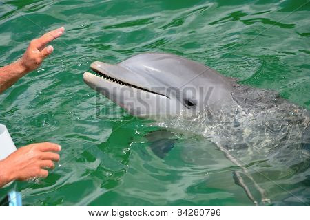Hands Of A Person Touching A Dolphin