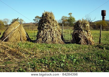 Hay And Corn Sheaves