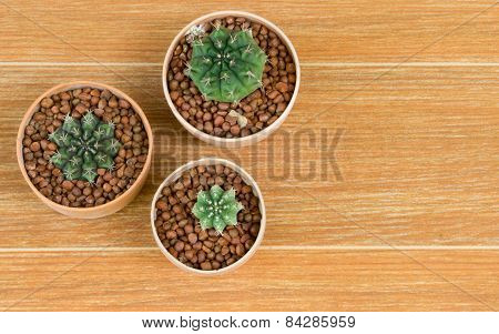 Top View Of Three Potted Cactus On Brown Background