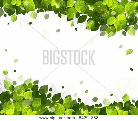 Summer Background Of Leaves