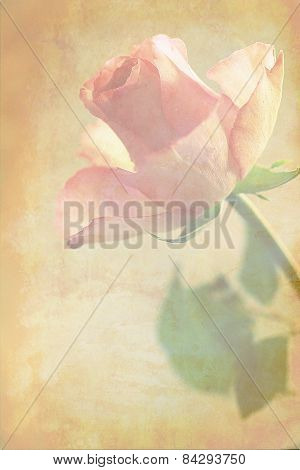 Pink Roses Grungy Background