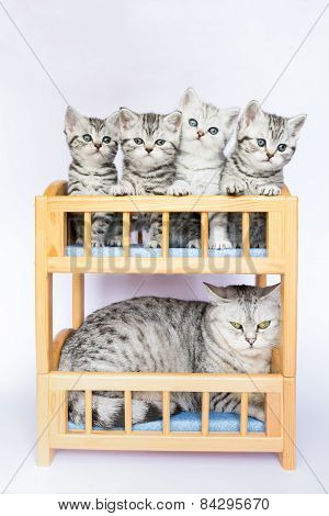 Mother cat with four young kittens in bunk bed