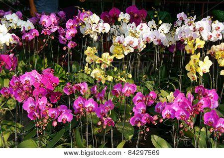 Spring Flowers, Vietnam Flower Market