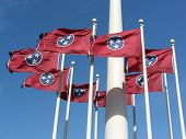 stock photo of flag pole  - Group of Tennessee State Flags on flag pole flying - JPG