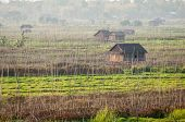 foto of floating  - Landscape of floating gardens and bamboo wooden house on Inle lake Myanmar - JPG